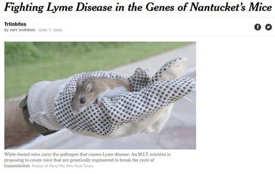 Lyme_Nantucket_NYTimes.png